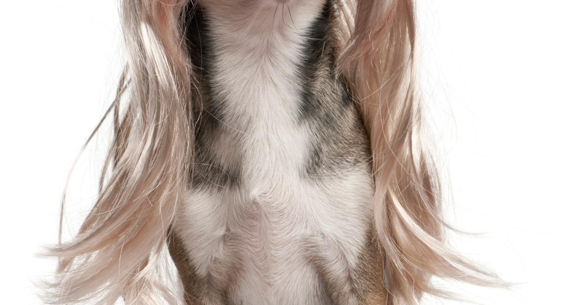 Koiran Punkkirokote