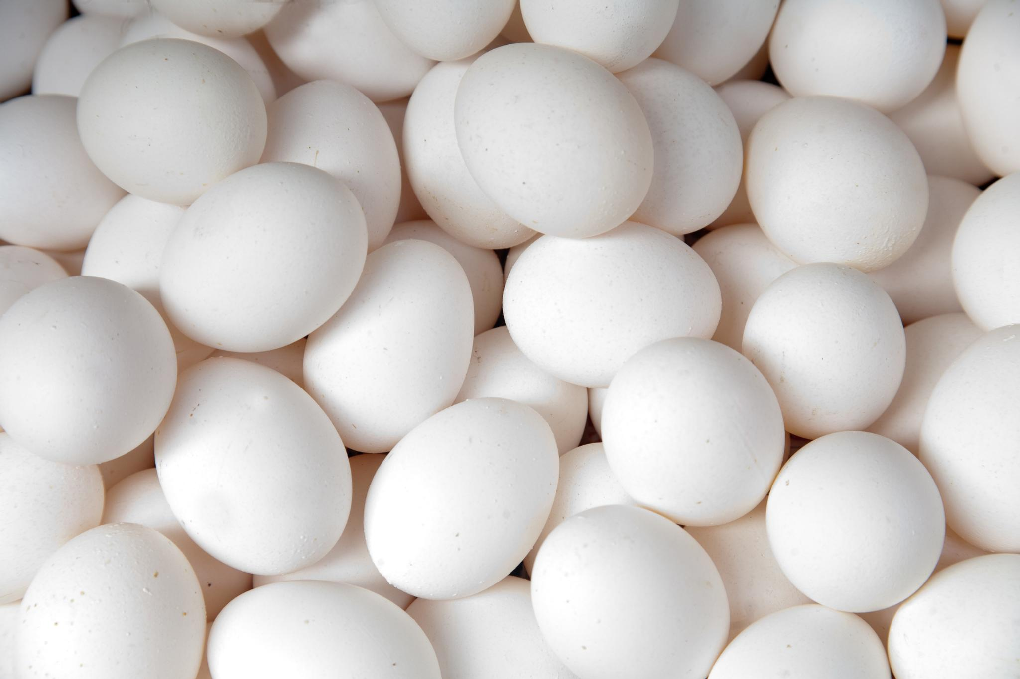 Kananmunan Proteiini