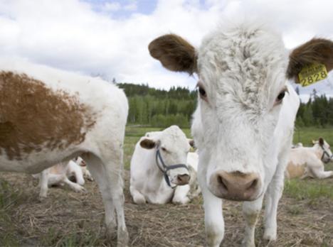tytöt ruiskuttaminen maitoa